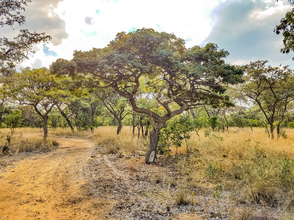 Walks - Camping at Matamba Bush Camp, Limpopo
