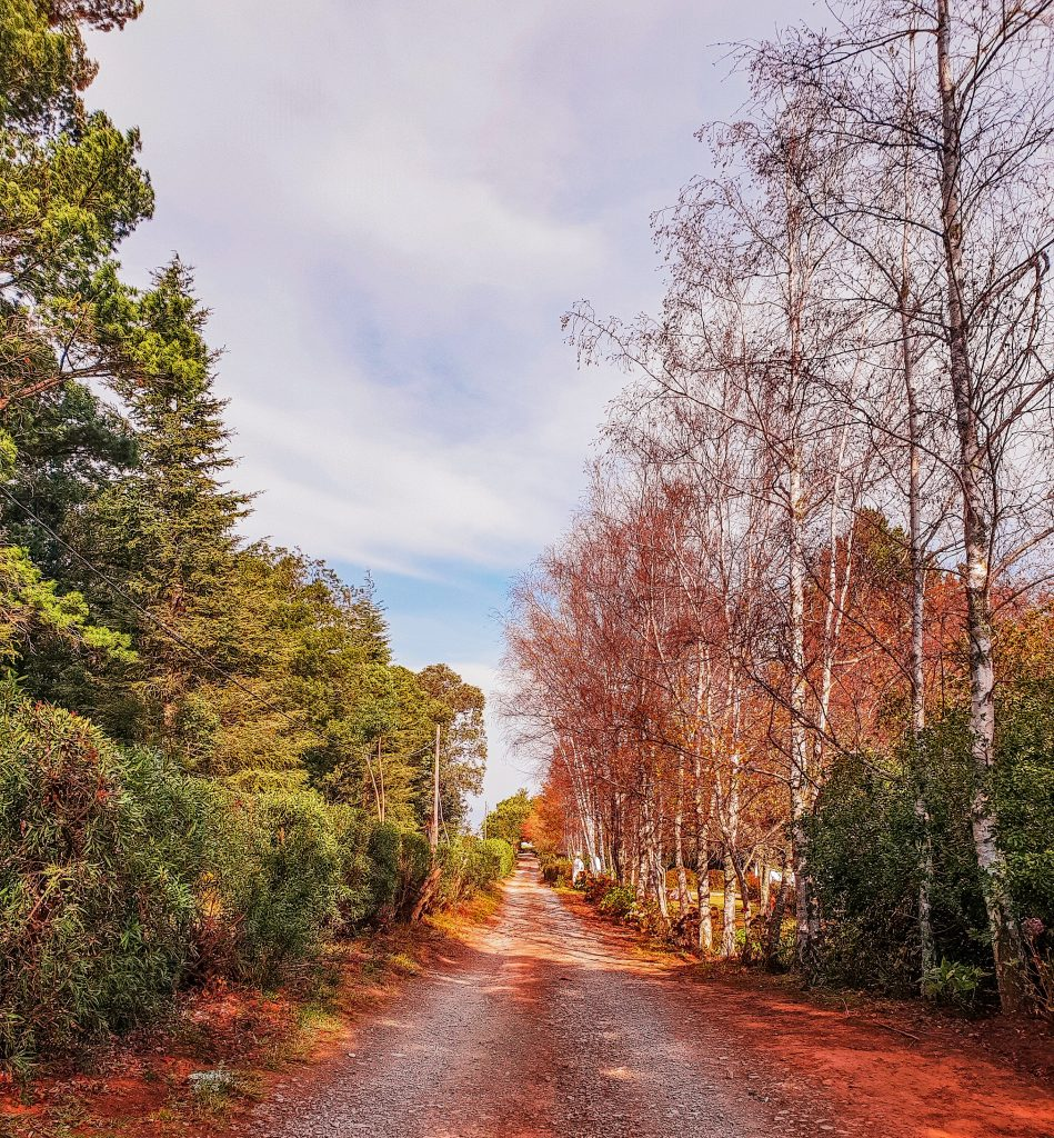Destination Guide Hogsback - Road Conditions