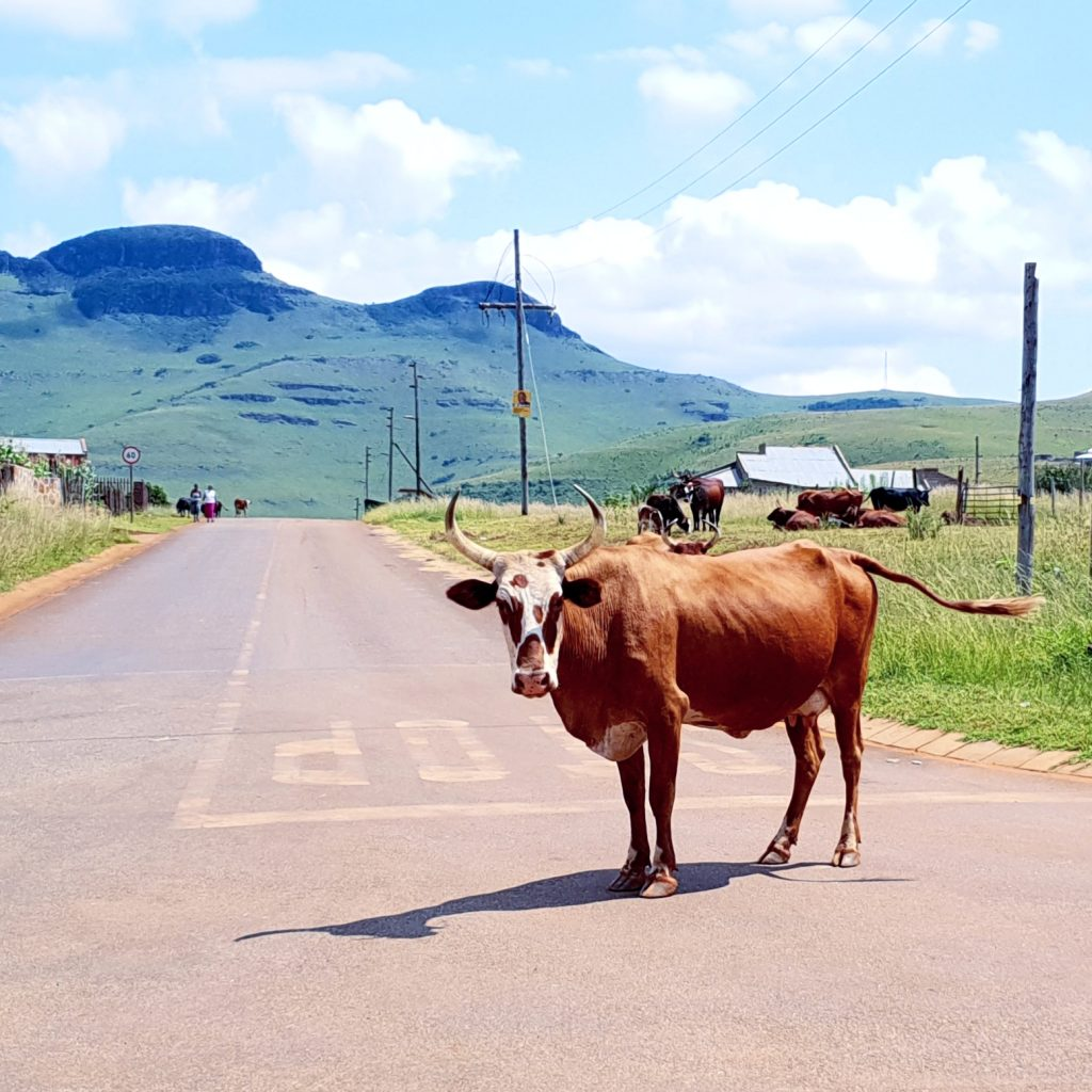 Drive Africa: Road Trip Tips for Southern Africa