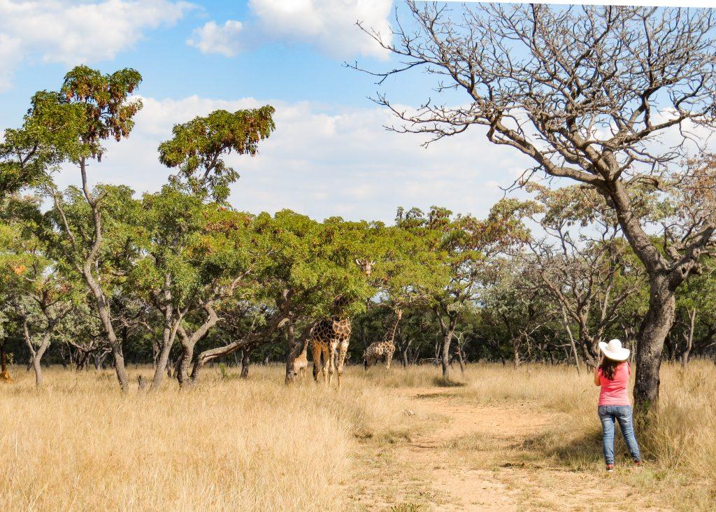 Limpopo Camping - Matamba Bush Camp